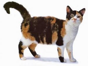 Náhodne genetickou mutáciou u mačky domácej zvláštne mačiatka z